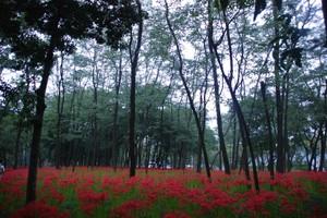 Higanbanamori3