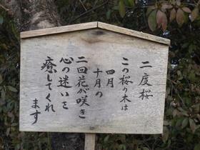 nidosakura-kanban